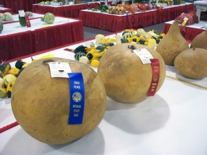 Photo of gourds at a fair with blue and red ribbons