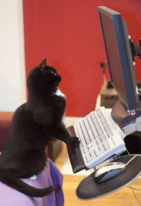 Cat staring intently at a computer screen.
