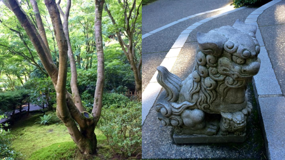 Photos taken at the Japanese gardens in Portland, OR - one of a tree surrounded by green moss and foliage, second of a dragon statue