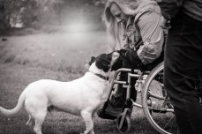 Black and white photo of a woman using a wheelchair, reaching down to pet a dog.