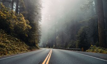 A road with trees on each side and fog over the road