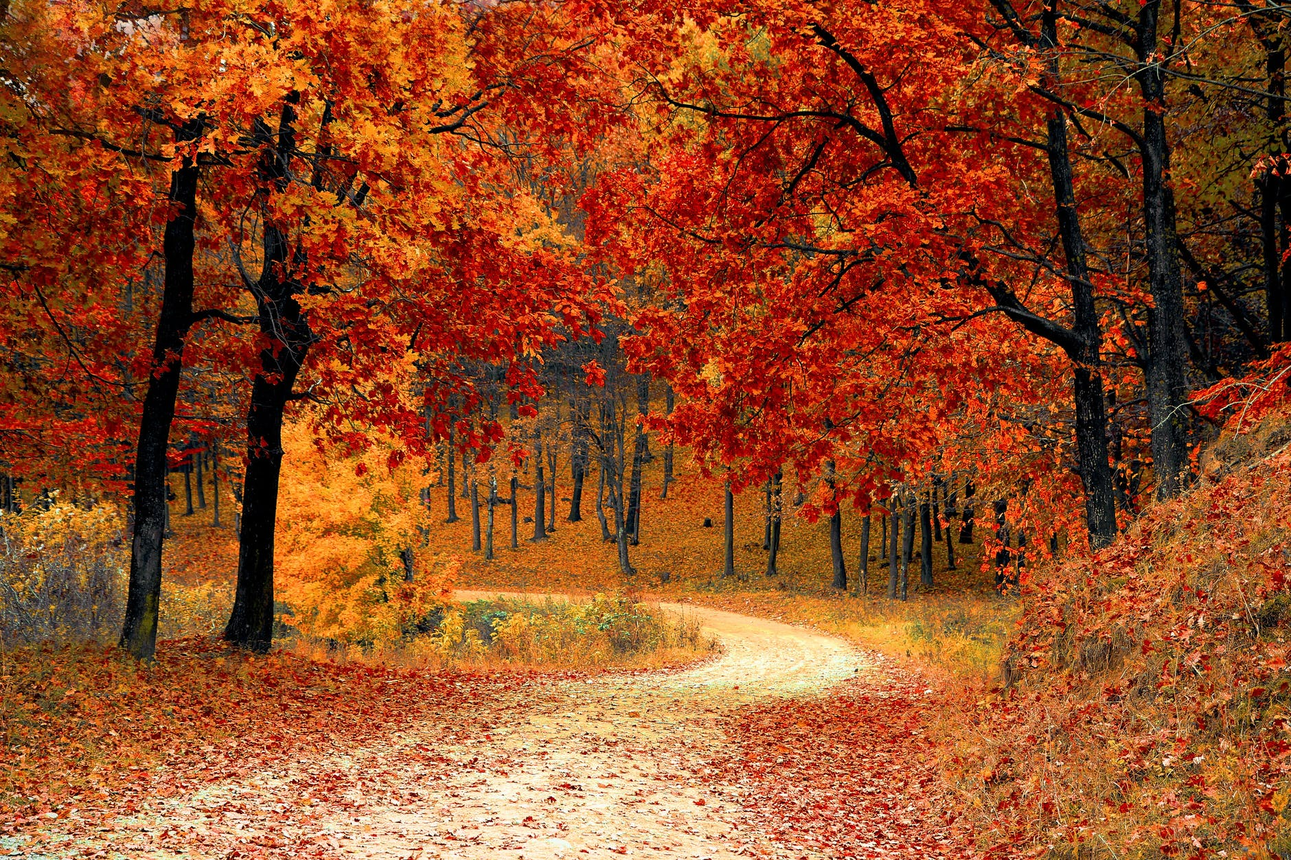 a road surrounded by trees in the fall